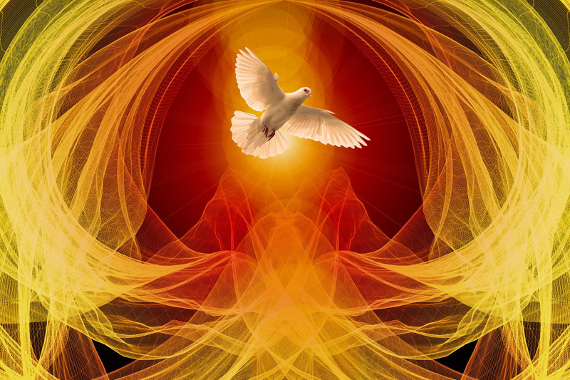 Dove rising image